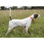 Rock - Pointer - World Class Bird Dogs