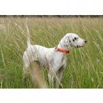 Dot - Pointer - World Class Bird Dogs